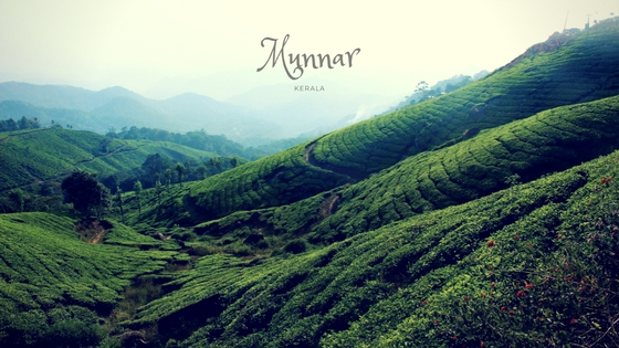 best things to do in Munnar
