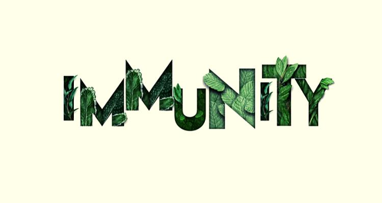 Mango and immunity