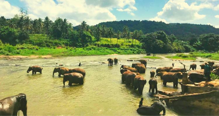 Rambukkana Elephants