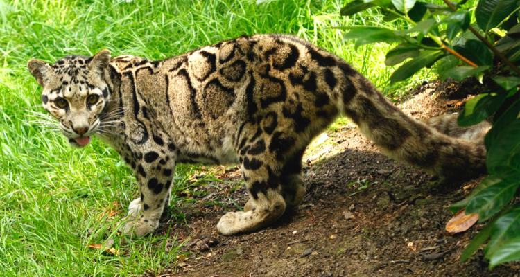 Rare Wildlife of Arunachal Pradesh