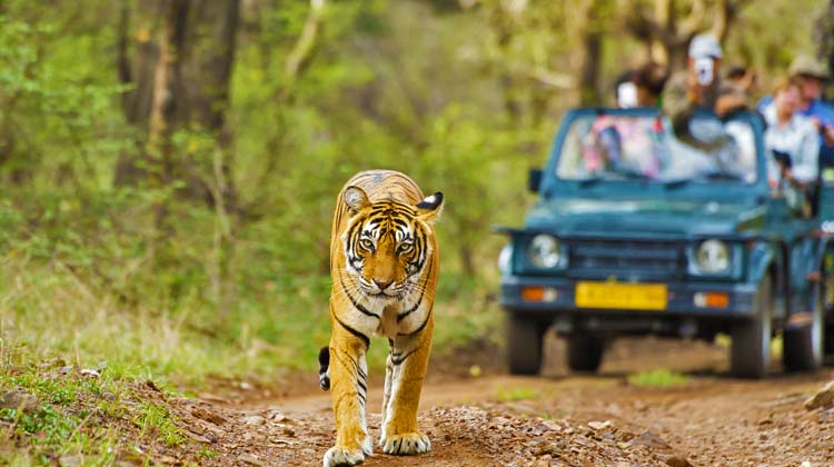 Jeep-safari-in-india