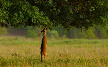 bandhavgarh-kanha-national-park-india