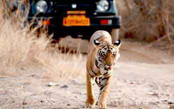corbett-tiger-reserve-india