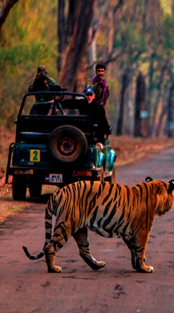 jeep-safari-ranthambore