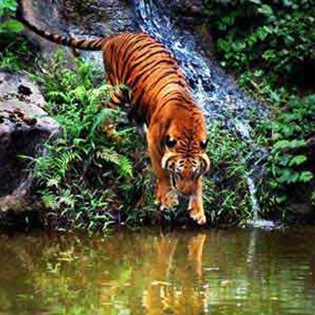 Nagarhole jungle safari