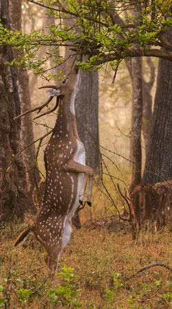 nagarhole-national-park-india