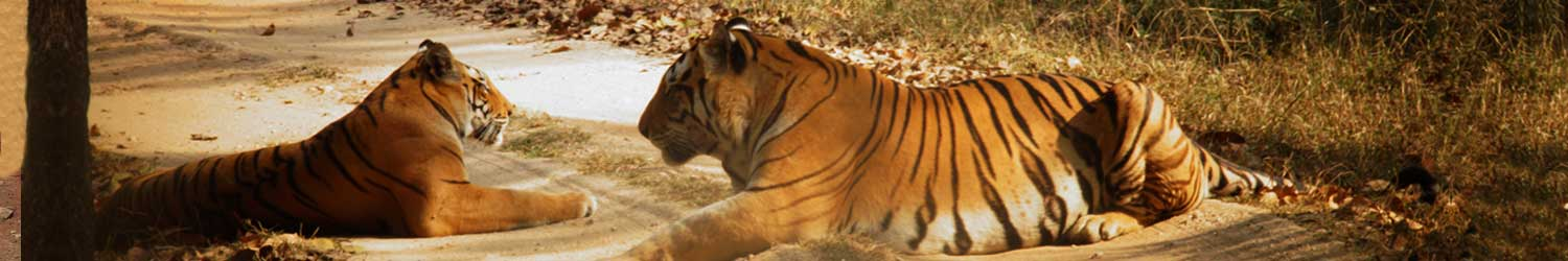indian-wildlife-tour