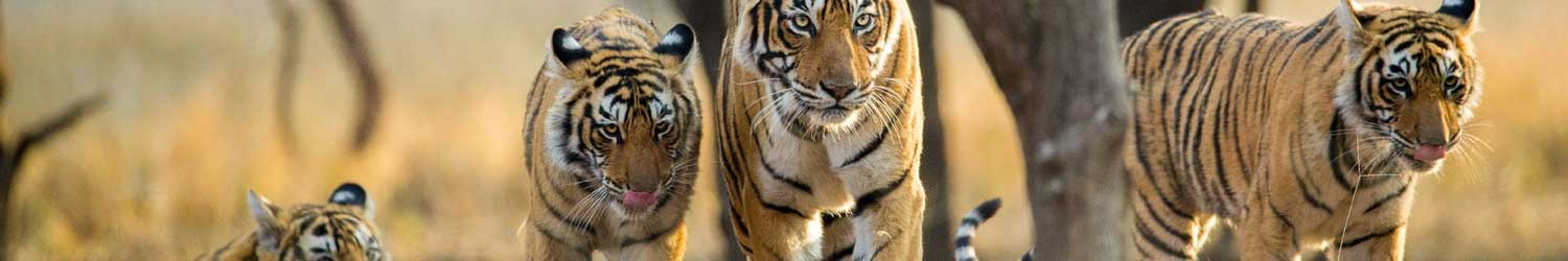 wildlife-india-tour