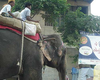 Elephant in the streets of ahmedabad