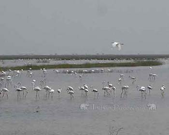 Velavadar National Park, Gujarat