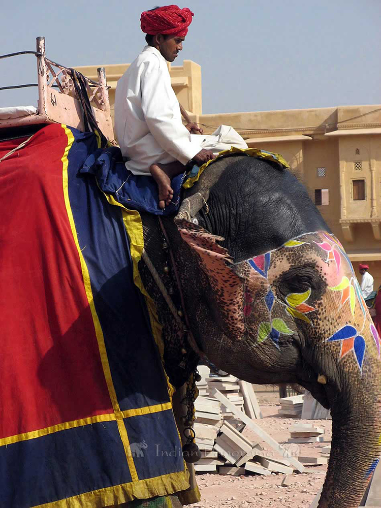 Amber Fort Elephant & Mahout