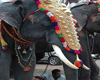 Parade Elephants - Cochin