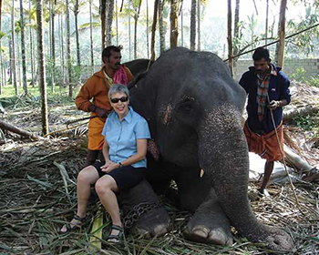 Elephant Knee-Sitting - Periyar