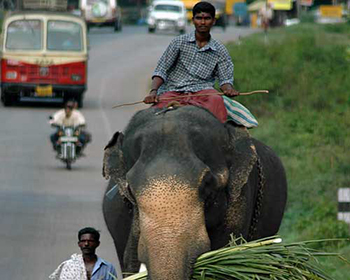 Roadside Elephant