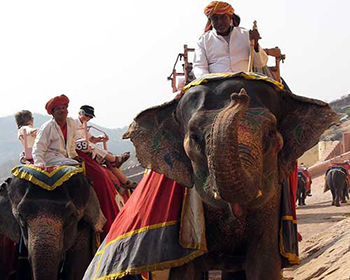 Amber Fort Elephant Rides