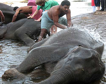 Elephant Washing, Kodanad River