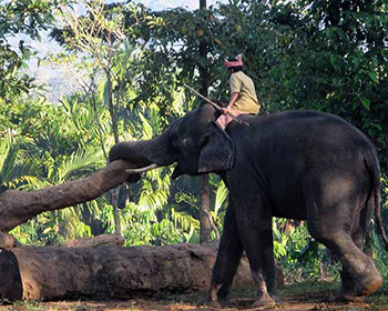 Kodanad Elephant Training Camp