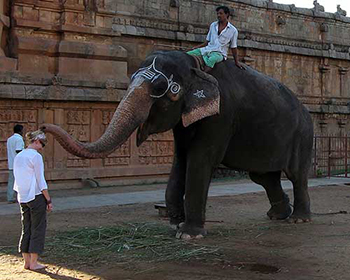 Elephant blessing - Tanjore