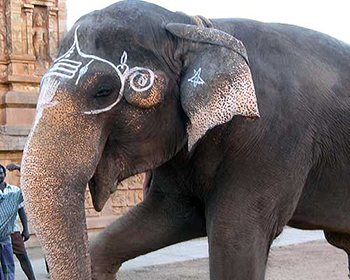 Friendly Temple Elephant