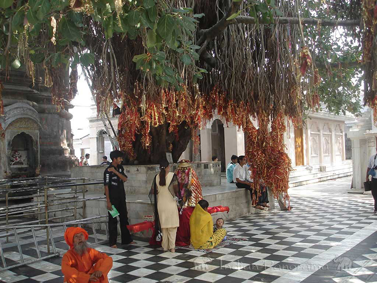Offerings Hung On Sacred Tree Inside Bajreshwari Devi Temple, Kangra Valley