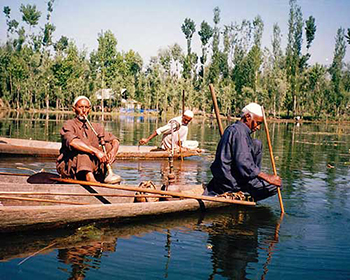 Summer On Dal Lake, Srinagar