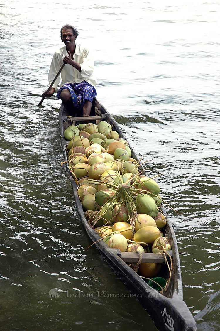 Coconuts From Canoes