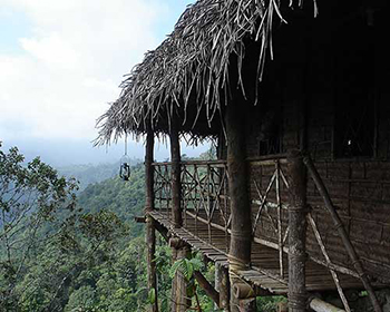 Treehouse In Wayanad