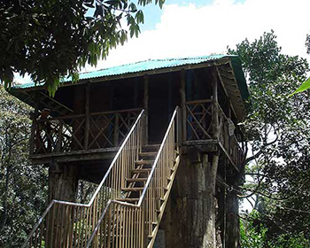 Treehouse In Thekkady, Periyar