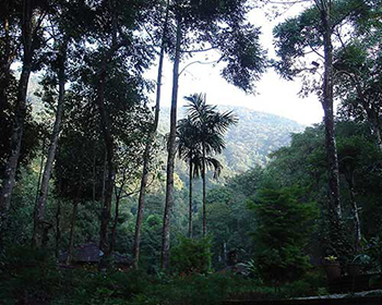 Wayanad Forest Scenery