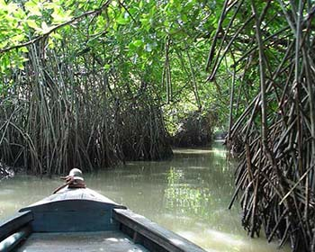 Pichivaram Backwaters and Mangrove Forest
