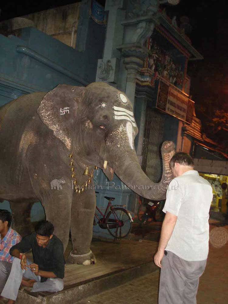 Elephant blessing in Pondicherry