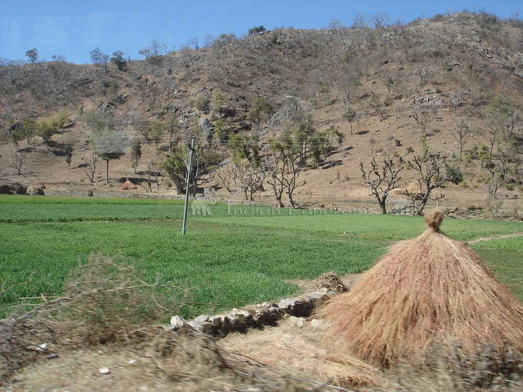 Farms In Rajasthan