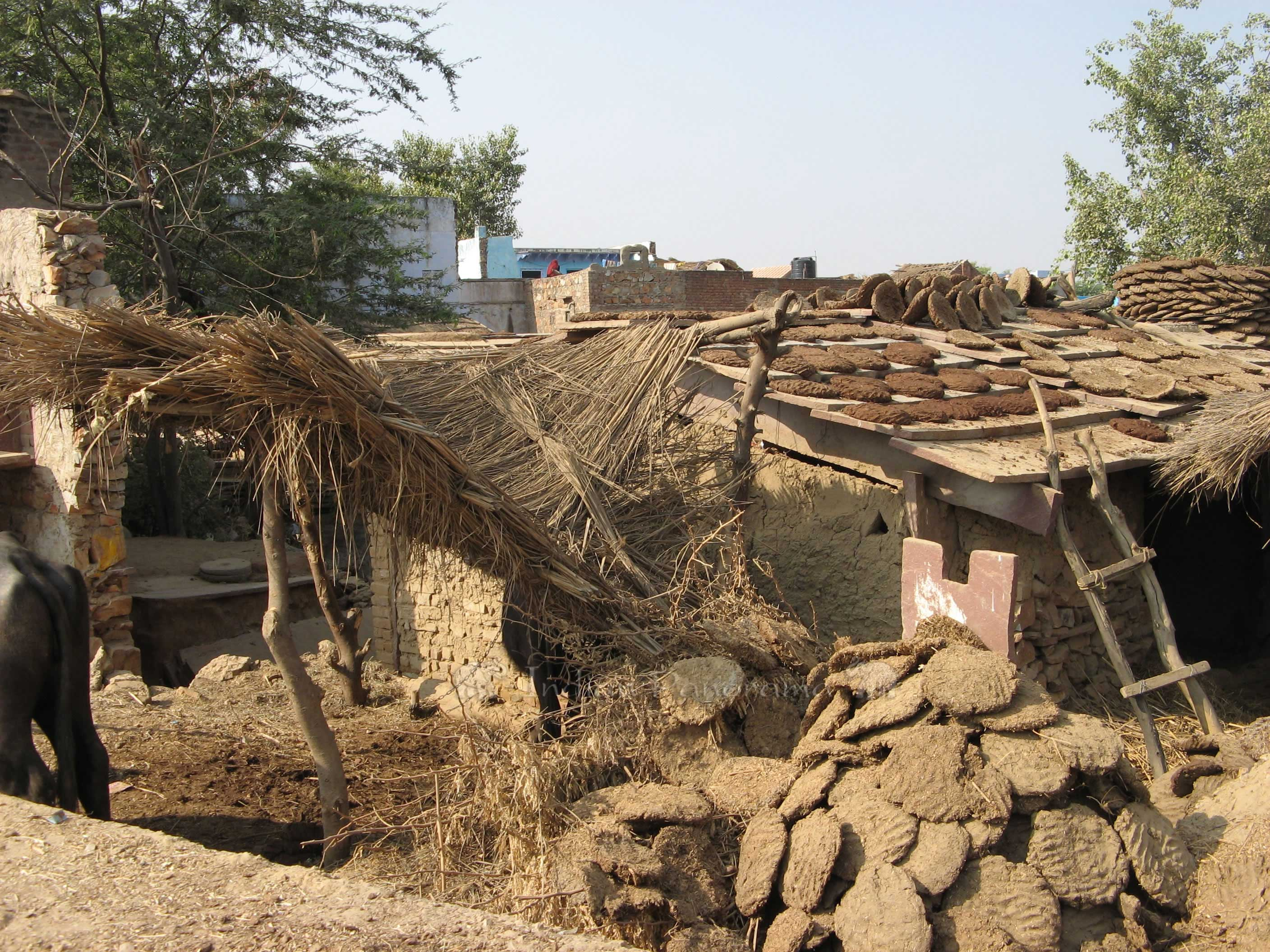 Dung Roof For Village Houses