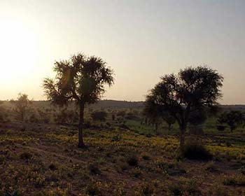 Rural Scene Near Osiyan