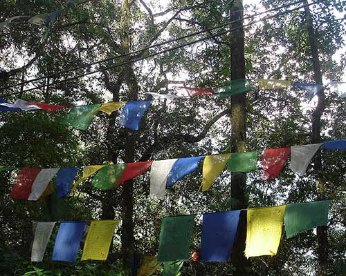 Tibetology Institute Prayer Flags
