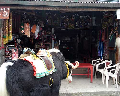Tsomgo Lake Shop, Sikkim