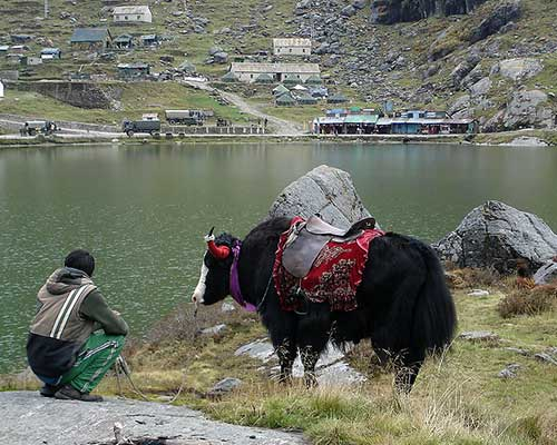 Tsomgo Lake Yak Ride, Sikkim