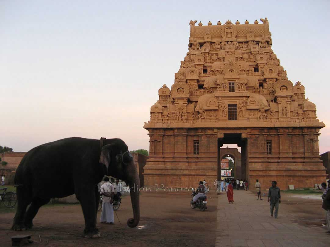 Friendly Temple Elephant, Tanjore