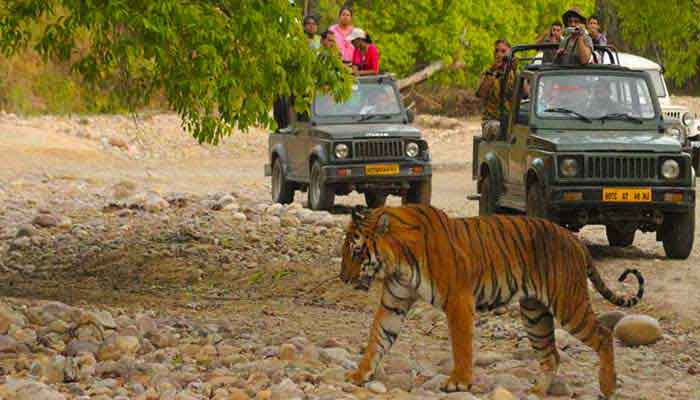 bandhavgarh-jungle-drive-india