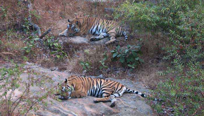 bandhavgarh-national-park-india-tour