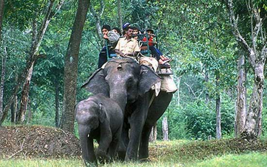 elephant-safari-nagarhole