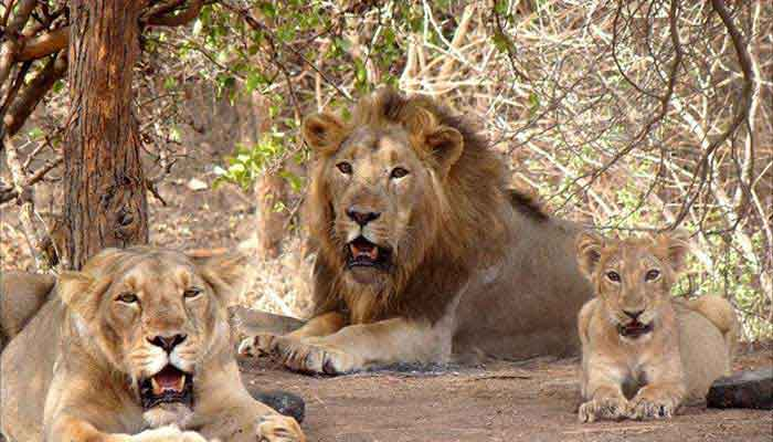 gir-national-park-india