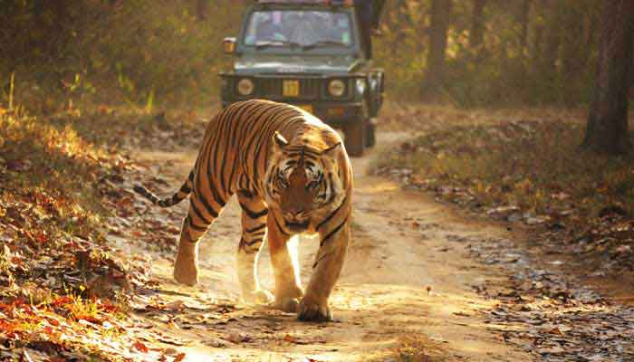 kanha-national-park-india