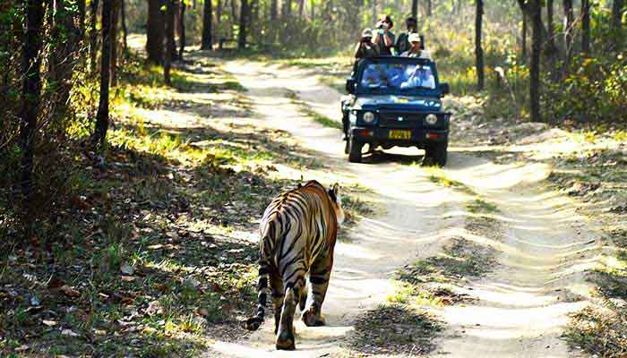 kanha-national-park-visit