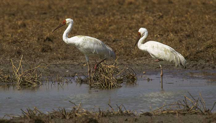 keoladeo-ghana-national-park-bharatpur