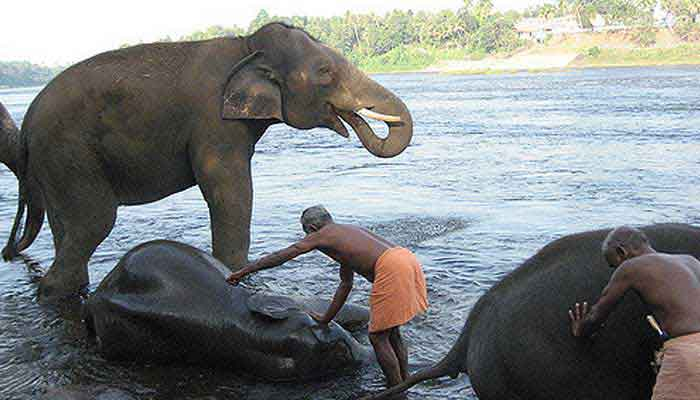 kodanad-elephant-training-camp