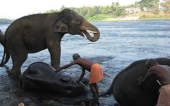 kodanad-elephant-training