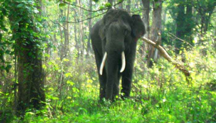 mudumalai-southindia-wildlife