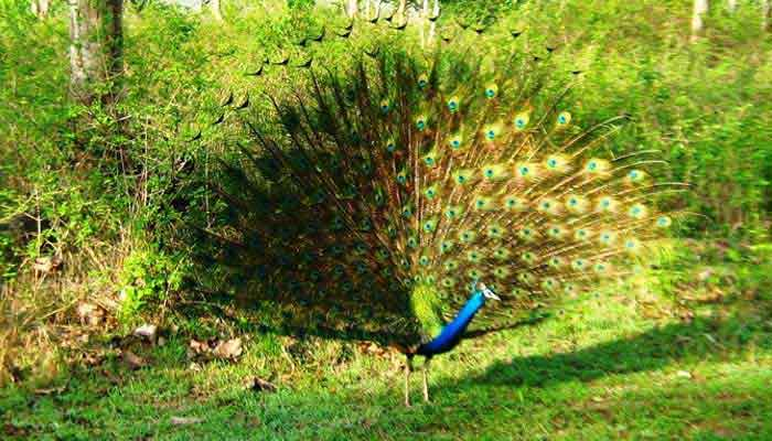 mudumalai-tour-wildlife