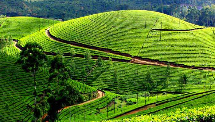 ooty-munnar-tour
